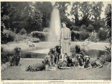 Golden Retriever Kennel FAMOUS DOGS  PHOTO 1934  ORIGINAL VINTAGE DOG PRINT