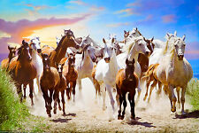 (LAMINATED) ROAMING FREE - WILD HORSE STAMPEDE POSTER (91x61cm)  NEW LICENSED