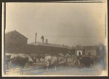 ALGERIE LAGHOUAT PHOTO PRISON SORTIE DU TROUPEAU JAIL 1904