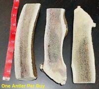 JUMBO SPLIT Natural ELK Antler Shed Premium Dog Dental Chew Moose FRESH Horn ONE