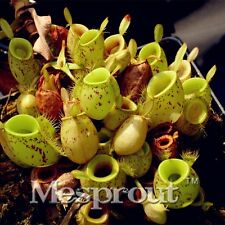 50PCS Apple Nepenthes Eating Mosquito Seed Seeds Plants Garden Decoration Flower