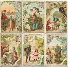 Chromo Liebig Sang. 563 ITA Linguaggio dei Fiori IV ANNO 1898