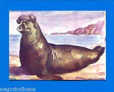 ANIMALI - Lampo 1964 - Figurina-Sticker n. 103 - ELEFANTE MARINO -New