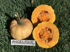 Pumpkin ANGELIQUE-Pumpkin Seeds-FAMILY SIZE, SWEET & TASTY-12 SEEDS..