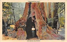 California postcard Grandmother Tree, Big Basin, big trees