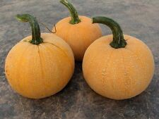 Pumpkin WINTER LUXURY-Pumpkin Seeds-BEAUTIFUL HEIRLOOM-12 FRESH SEEDS