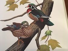 Don Eckelberry ( Wood Duck ) Autographed lithograph print series 2
