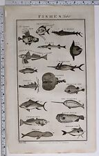1788 ORIGINAL PRINT FISHES TORPEDO TUNNY BOOPS SEA UNICORN SWALLOW-FISH WHALE