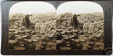Keystone Stereoview The Giant's Causeway, No. IRELAND Coast from 1930's T600 Set