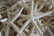 """White Starfish Pencil 1 Dozen 5""""-6"""" Great for weddings or party"""