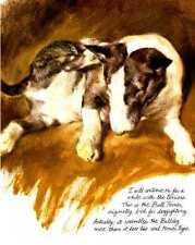 Colored Bull Terrier - Vintage Dog Print - Poortvliet