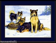 English Print Siberian Husky Sled Dog Dogs Puppy Puppies Vintage Art Poster