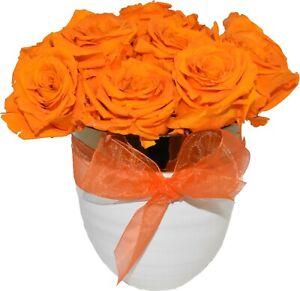12 pc- Orange Preserved Real Ecuador Roses Flowers in  white ceramic vase