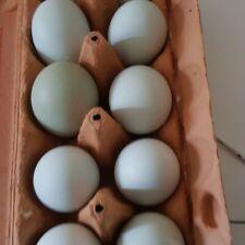 ❤10 stck Britische Englische Lavender Aracuana  ❤ .Hatching eggs