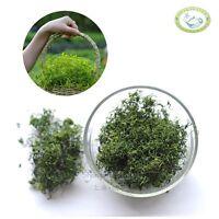 Top Organic Jiaogulan Gynostemma Pentalhyllum Spring Stem Tonic with Selenium