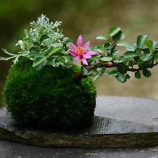 Mini Unique Flower Moss Ball Planter Bonsai Micro Garden Decor Gardening Pot