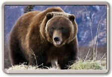 FRIDGE MAGNET - GRIZZLY BEAR - Large - Nature Wildlife