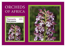 Tanzania-2014-Flowers-Orchids of Africa
