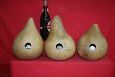 "3  -  6"" BIRDHOUSE GOURDS (BORED 1-1/4"" READY TO HANG)"