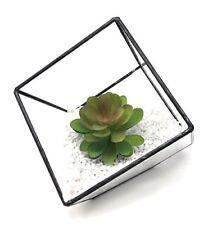 Plantes et jeunes pousses de cactus et plantes grasses