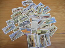 Fish/Sea 1918 - 1939 Collectable Player's Cigarette Cards