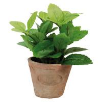 Esschert Jardin Terre Cuite Artificiel Mint Herbe Plante Pot Intérieur Extérieur