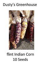 10+ count Ornamental Flint Indian Corn Heirloom Seed Beautiful Autumn