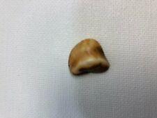 Moose Tooth - Pap Loyal Order of Moose, Pre-Owned