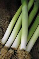 Suffolk Herbs 100 Seeds Organic Leek Bandit