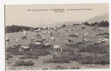 France, Pyrenees, La Cerdage, Un Paturage au fond le Carlite Postcard, B271