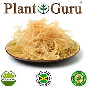 Irish Sea Moss Whole Leaf 100% Pure Raw WildCrafted Chondrus Crispus Bulk