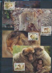 XC59253 Algeria 1988 animals fauna flora wildlife maxicards used