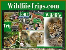 Wild Life Trips .com Travel Camp Forest Domain Name for Sale Put Website Here