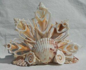 Vintage Sea Shell Napkin Holder NICE!