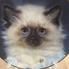 Lady Blue Himalayan Persian Siamese Collection Cameo Kittens Qua Lemonds Plate