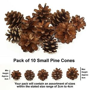 Small Real Pine Fir Cones 2-4cm Art Floral Craft Wedding Christmas Decoration