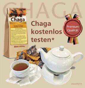 CHAGA PILZ - Echter sibirische Chaga Birkenpilz kostenlos* testen