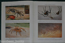 1933 magazine articles about SPIDERS, lots of info & photos, color art, trapdoor