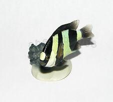Yujin Marine fish figure Part.1 gashapon - Whitetail dascyllus (one figure)