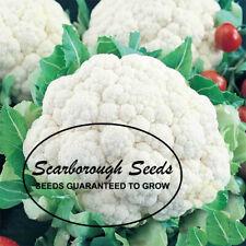 Scarborough Seeds Snowball Cauliflower 600 Seeds Heirloom Non Gmo Garden Seeds
