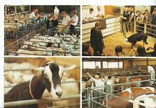 Leicestershire Postcard - The Cattle Market - Melton Mowbray    DP97