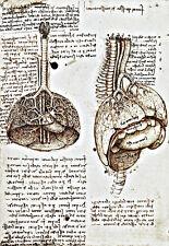 Lungs  heart and abdominal organs of a pig  Leonardo da Vinci  Poster Print