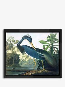 Tropical Bird II Audubon Framed Print 56 x 46cm Blue