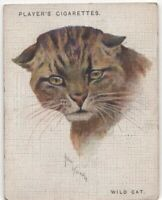 Wildcat  Africa India Feline 80+ Y/O Trade Advertising Card