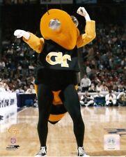 Georgia Tech Yellowjackets Mascot 8x10 Photo