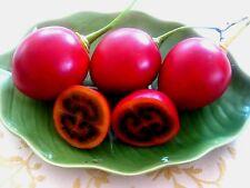 Tamarillo - CYPHOMANDRA BETACEA - 25 Seeds Tree Tomato - Vegetables/ Fruits
