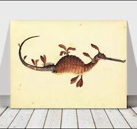 "VINTAGE FISH ART - Leafy Sea Dragon - CANVAS ART PRINT POSTER - 36x24"""