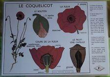 Création Affiche scolaire Set de Table Rossignol le Coquelicot Format A3