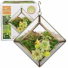 Glass Hinged Roof Terrarium Succulent & Air Plant Greenhouse for Small Places