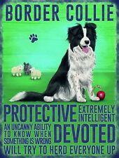 Border Collie dog .., Colourful Metal Fridge magnet Sign,